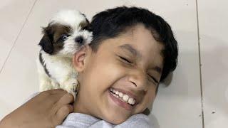Amazing Experience & Urgent Shopping |First night with Pet| Happy Shihtzu dog | Vlog | Sushma Kiron