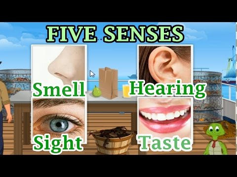 The 5 Senses: Sight, Hearing, Taste, Smell and Touch, Preschool and Kindergarten Activities