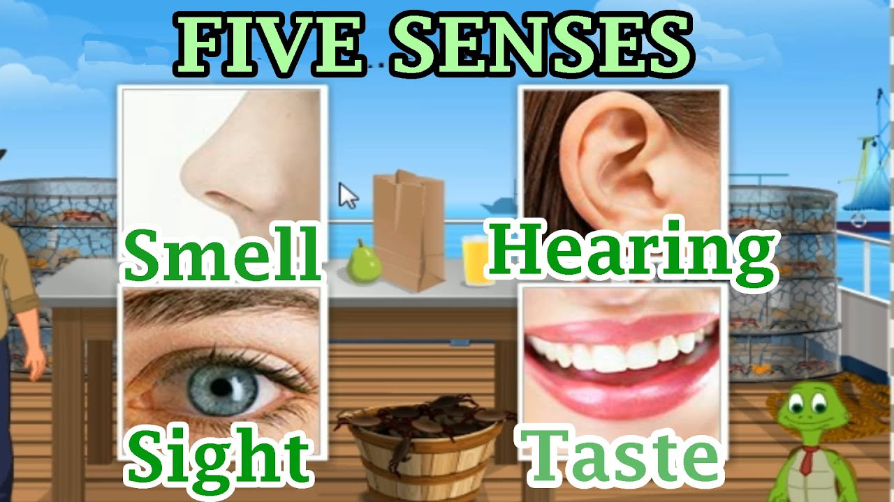 The 5 Senses Sight Hearing Taste Smell And Touch