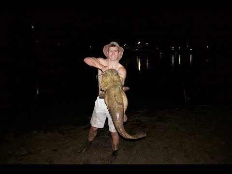 Light Bites and Flathead Catfish from YouTube · High Definition · Duration:  6 minutes 45 seconds  · 857 views · uploaded on 11/12/2016 · uploaded by TD Fishing