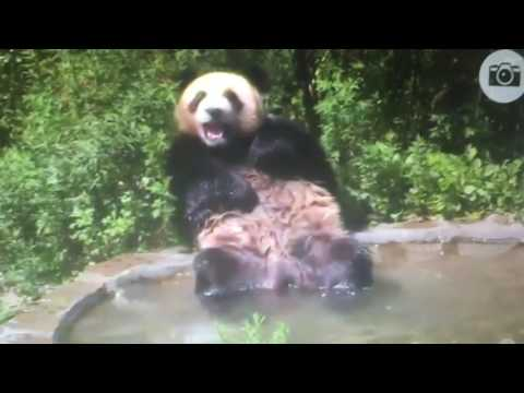 Wolong National Nature Reserve - When you are having so much fun you fall OUT of the pool.