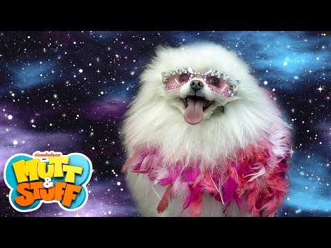 Mutt & Stuff - Lady Woof Woof (feat. John Michael Higgins)