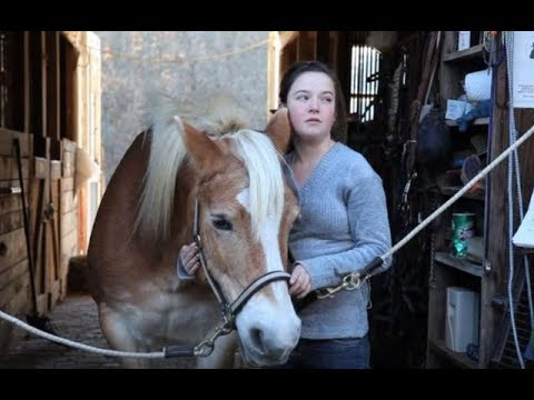 Stable Of Horses Was Bred For A Cruel Purpose Until One Woman Defies The Odds To Save Them