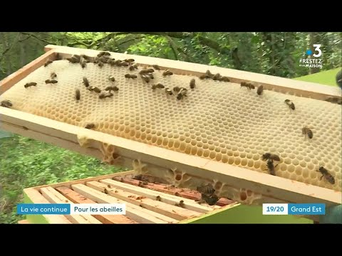 Coronavirus: les apiculteurs s'adaptent, les abeilles sont au travail