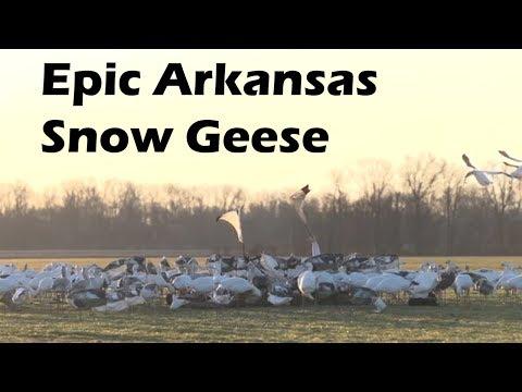 Epic Snow Geese in Arkansas S7 E1
