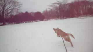 楽しかった雪遊びもそろそろお終い。 持って来いを頑張っている生後5ヶ...