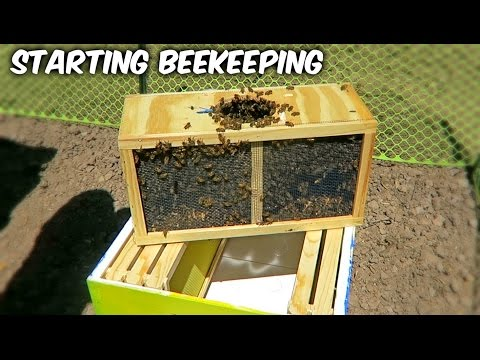Starting Beekeeping – Vlog Week 1 Season 1