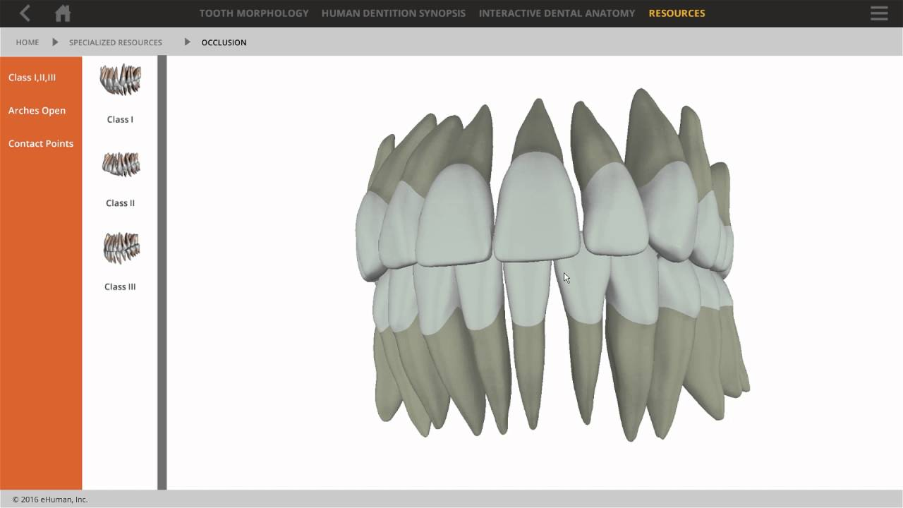 Tooth Atlas 8 for Hygiene Product Demo - YouTube