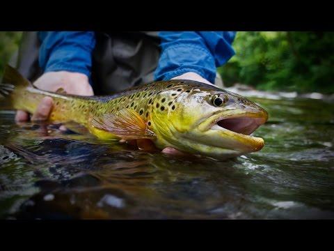 NICK FLY FISHING WITH GUIDE KEN HARDWICK - DAVIDSON RIVER JUNE 1, 2015