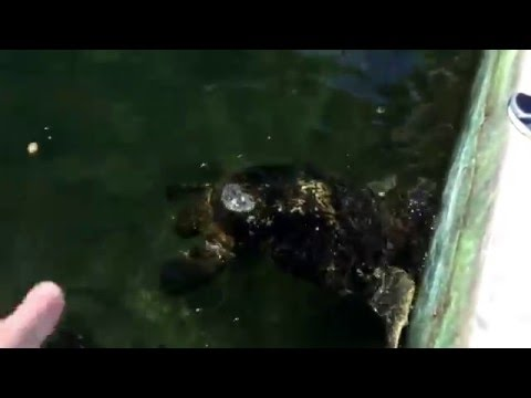 FVS EP 6-- Sea turtle hospital and fishing in the ocean!!!!!