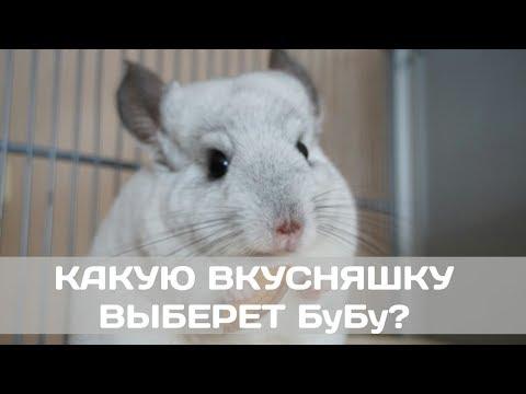 Видео: КАКУЮ ВКУСНЯШКУ ВЫБЕРЕТ БуБу?