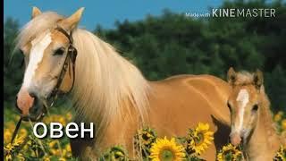 Гороскоп лошадей и собак🐴🐶