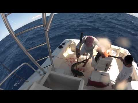 Wasabi Loco Deep Sea Fishing - Riviera Maya, Mexico