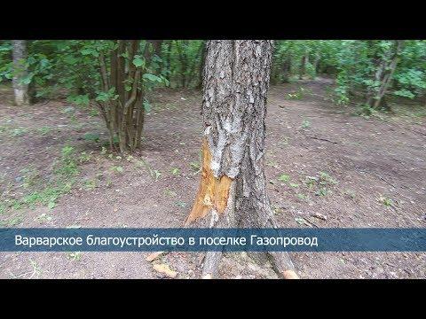Варварское благоустройство лесной зоны в поселке Газопровод