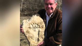 Footprints in stone - Overwhelming evidence of dinosaurs and man together by Pro Truth