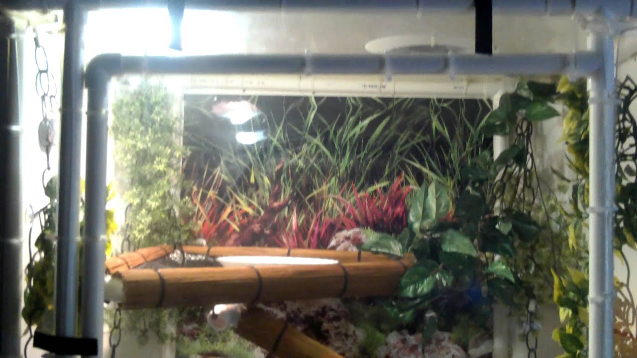 how to get rid of water dragons