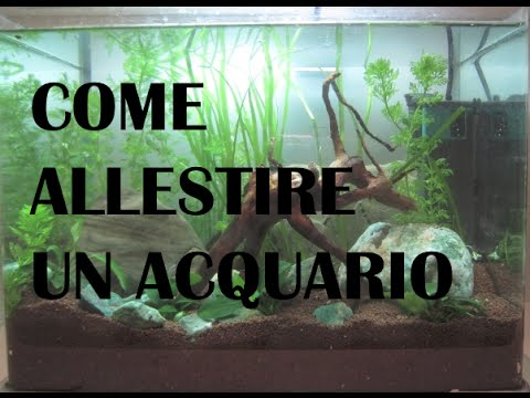 Come allestire un acquario tropicale d'acqua dolce ...