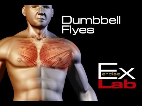 Dumbbell Flyes The Best Chest Exercises Youtube