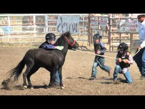 Wild Pony Racing Fairview 2012