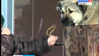 Пять безнадзорных собак сотрудники комбината зеленого хозяйства поймали