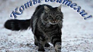 Факты по книгам Коты-воители #1