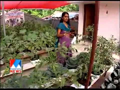 Farming in rain season