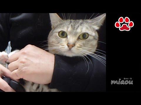 Cat Care,Chipie【Cat's room,Miaou】
