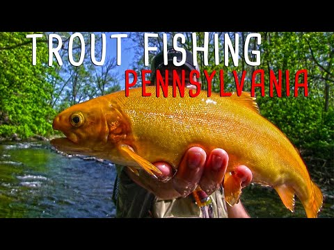Trout Fishing Pennsylvania