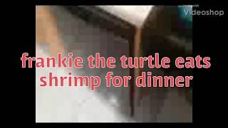 FRANKIE THE TURTLE EATS SHRIMP FOR DINNER