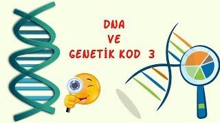 DNA Ve Genetik Kod 3 / 8 sınıf / Fen Bilimleri
