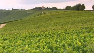Wine-Producing Regions - Mosel, Pfalz and Franconia | Discover Germany