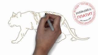как нарисовать тигра карандашом видео