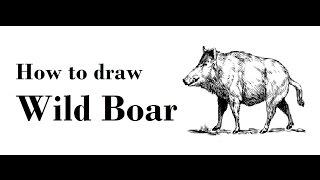 How to Draw Wild Boar step by step