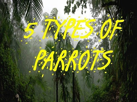 5 TYPES OF PARROTS