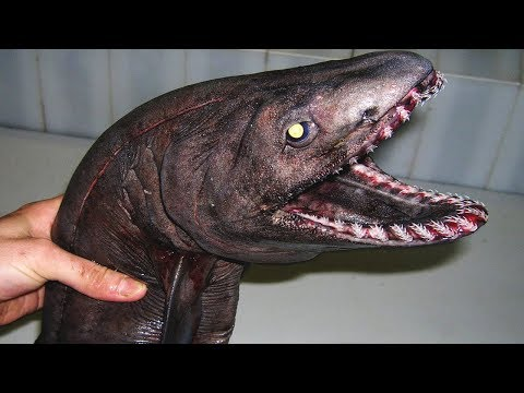10 Creepy Animals That Science Loves