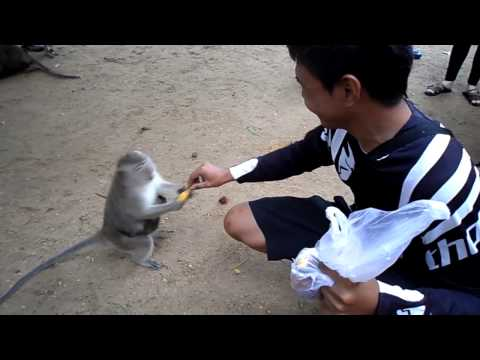 Feeding the Monkeys in Krabi