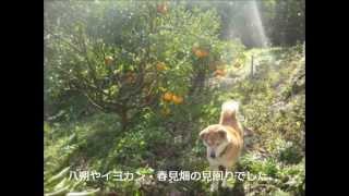 海と犬 ハナの追悼曲 ジャパンホイスッルD管で演奏 10年前 瀬戸内のし...