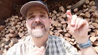 American Goldfinch - Learn a Bird - Episode #3