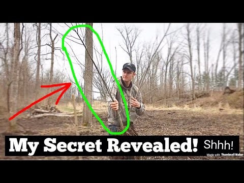 WILLOW TREES For BIG BUCKS!? (MUST SEE)