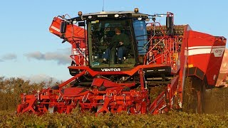 Grimme Ventor 4150 Big Potato Harvester Working Hard in The Field | Potato Season 18