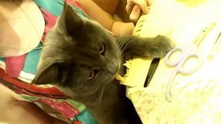 Как подстричь когти коту кошке котятам дома не поранив | Лайфхак кошки