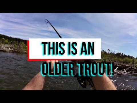World Class Tauranga Taupo River Full Of Trout