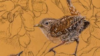 Two wrens in flowers. Pastel drawing. Fragment 2