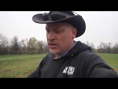 Mulch Hay Revival (planting)