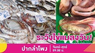 เตือนภัย-ซื้อปลาหมึกสด-ระวังไข่แมลงวัน-เสี่ยงท้องเสีย-ปากลำโพง-22-เม-ย-62-3-3