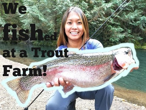 We Fished At A RAINBOW TROUT FARM -