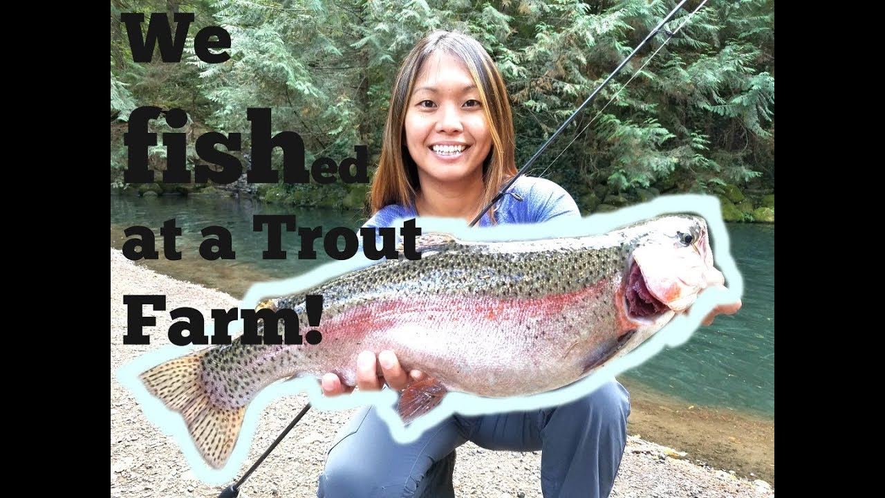 We Fished At A Rainbow Trout Farm She Beat Me Again Youtube