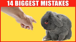 14 Common Mistakes Rabbit Owners Make