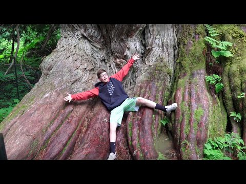 Humongous Trees Over 1000 Years Old  Ancient Forest, Prince George, BC