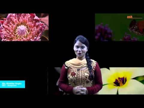 Morphology of Flowering Plants | Biology | Class 11 | NEET | AIIMS | askIITians